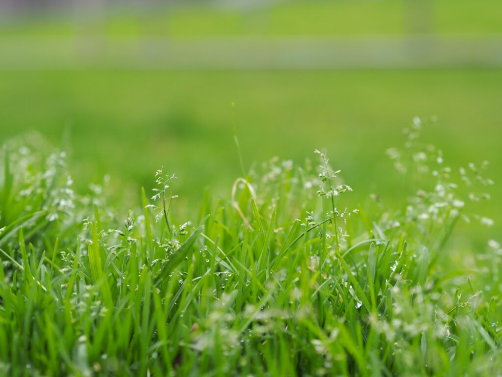 How Cold Is Too Cold to Plant Grass Seed