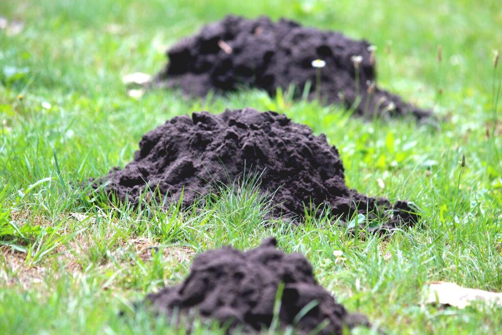 Worst Lawn Pests in Columbus