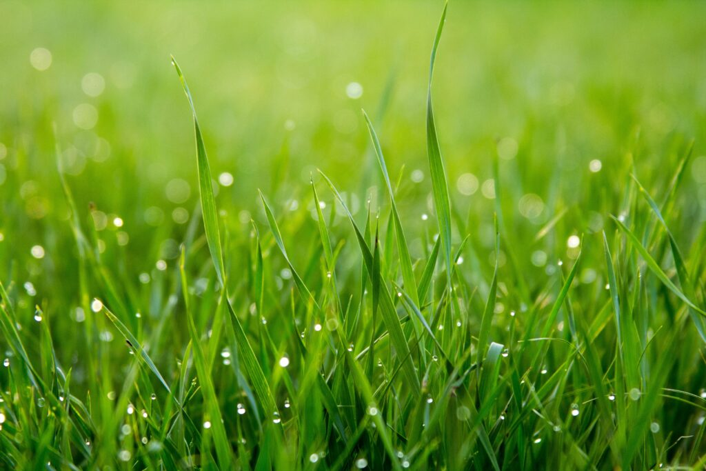 Do I Need to Bag My Grass Clippings if I Have Weeds?