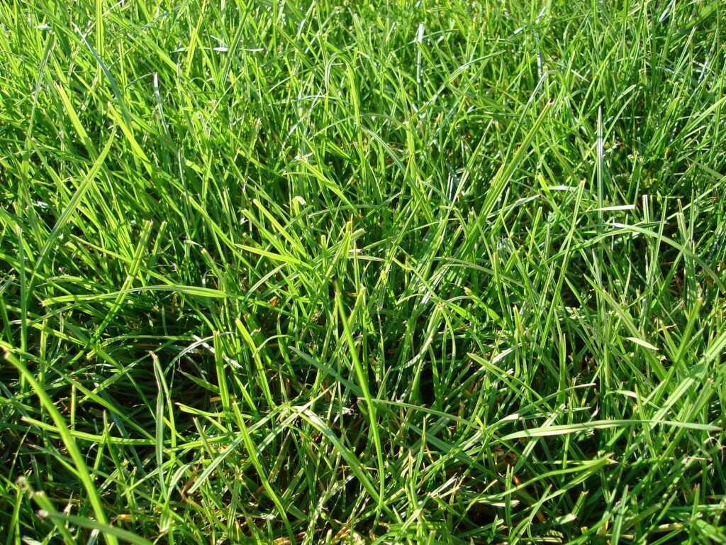 Help! My Lawn is Nothing But Weeds: What Can I Do?